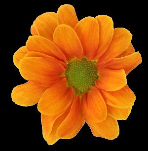 Oranje_bloem300